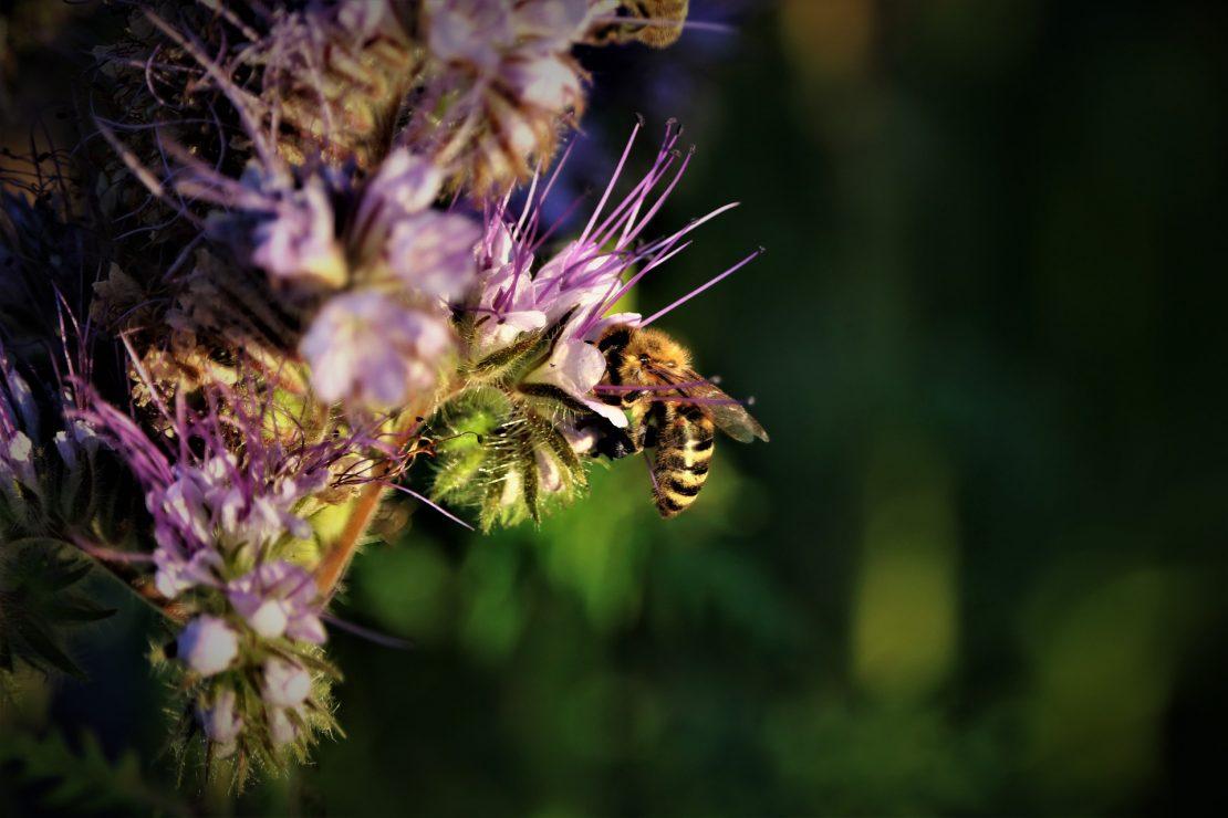 biodiversity-5203043_1920